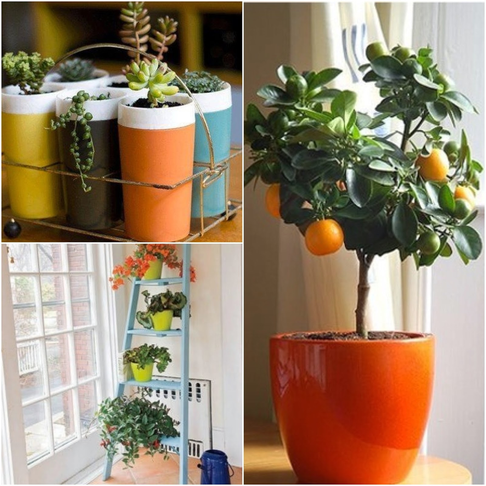 Maya doyle for Indoor gardening meaning
