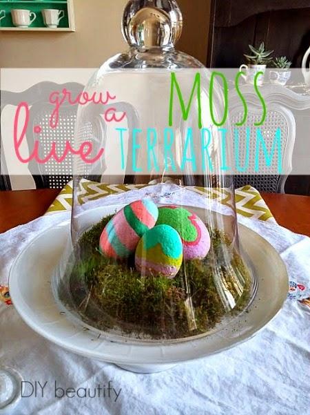 Live Moss Terrarium www.diybeautify.com