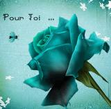 Una rosa me regaló su rosa.