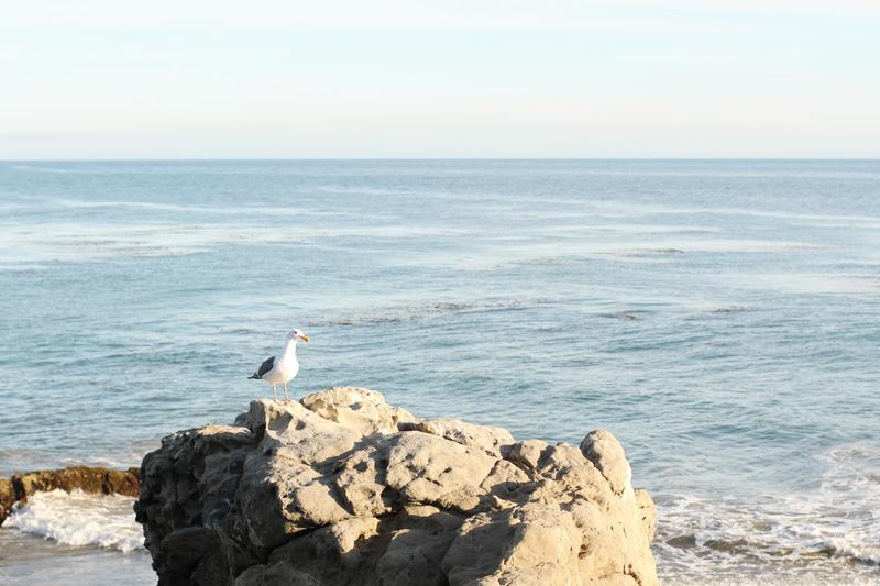 california // part three.