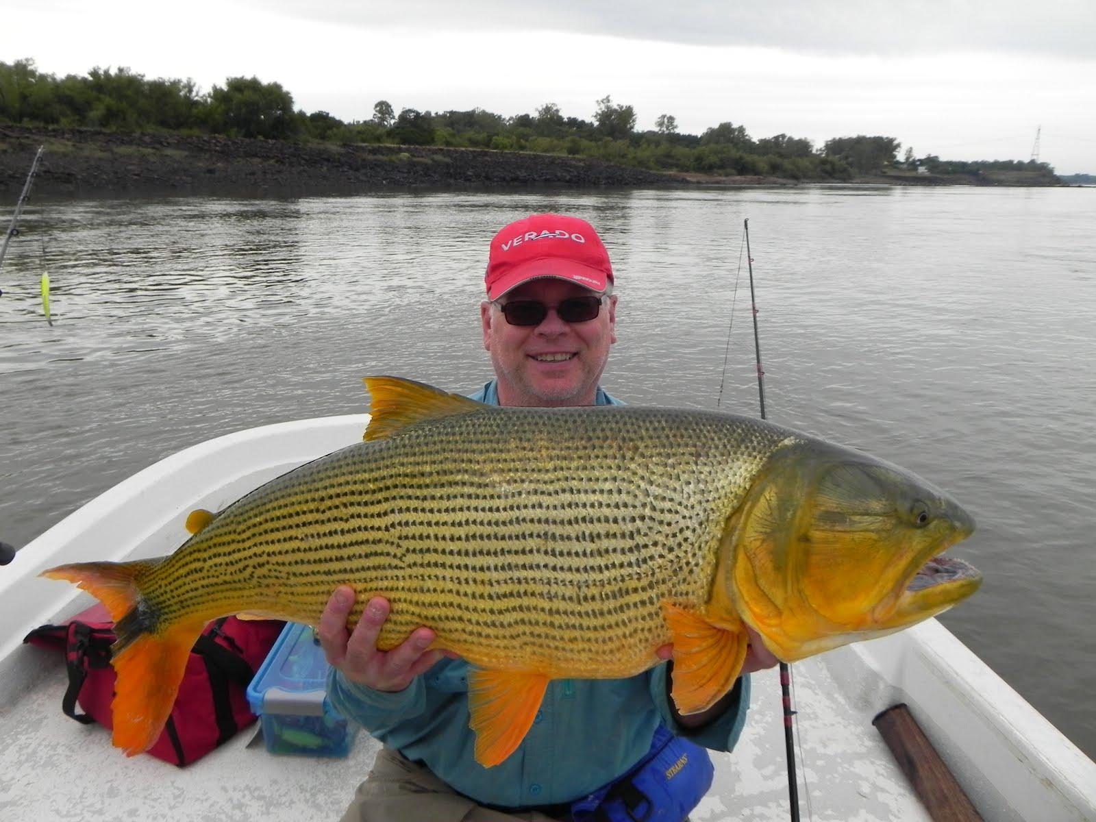 The fishing news la zona discounted price golden dorado for Golden dorado fish