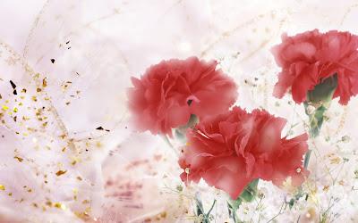 Gifts Rose Flowers Beautiful desktop backgrounds