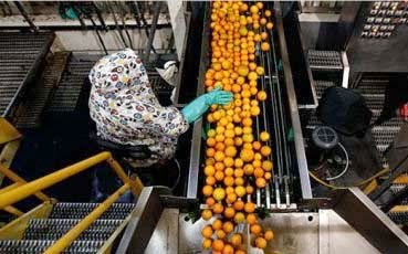 GTA to establish Orange juice factory in mungpoo