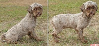 cachorro com expressões humanas