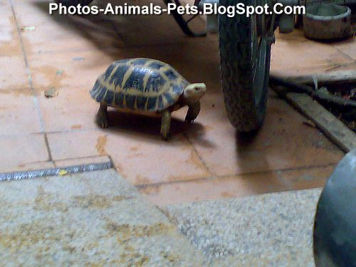 Images of turtles