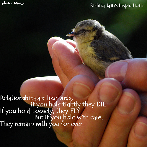 Funny Pictures Gallery: Birds quotes, larry bird quotes, bird quote