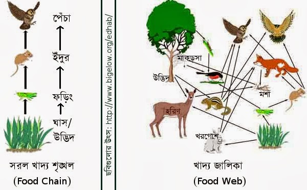 http://2.bp.blogspot.com/-01VSdBSkop8/UxOnVPwsg0I/AAAAAAAAC2I/qeEPyGHJpMc/s1600/food-chain_and_food-web.jpg