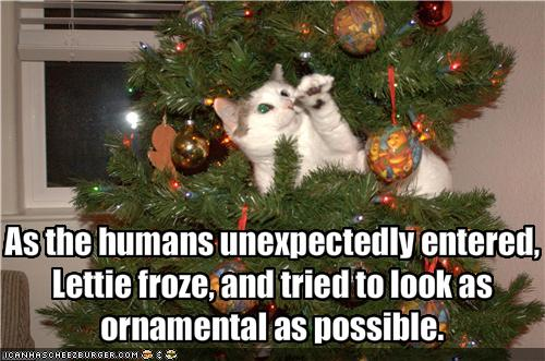 Funny christmas cat pictures Funny Pics