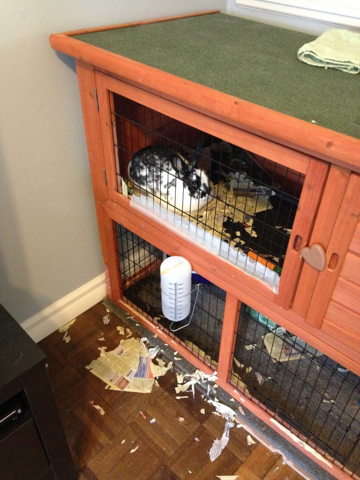 This Is What A Post Bunny Rager Looks Like:
