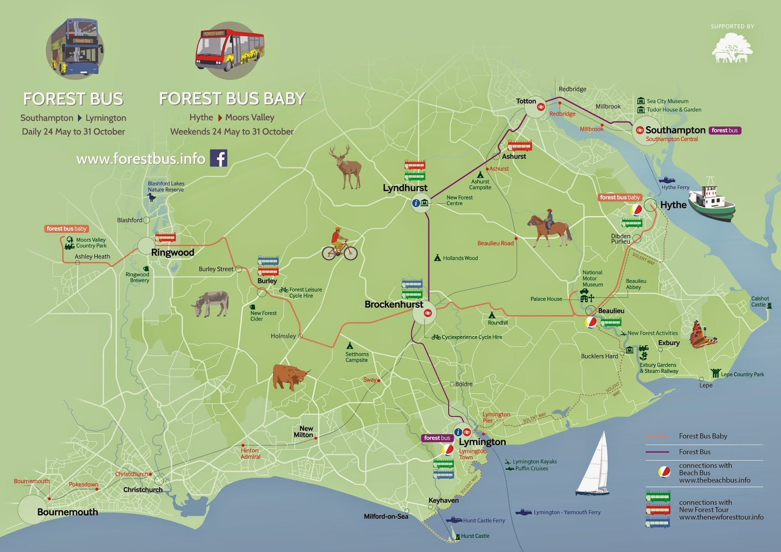 Three new bus services for the New Forest  The New Forest and