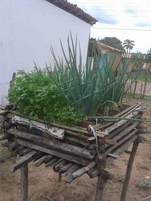 Uma horta no quintal
