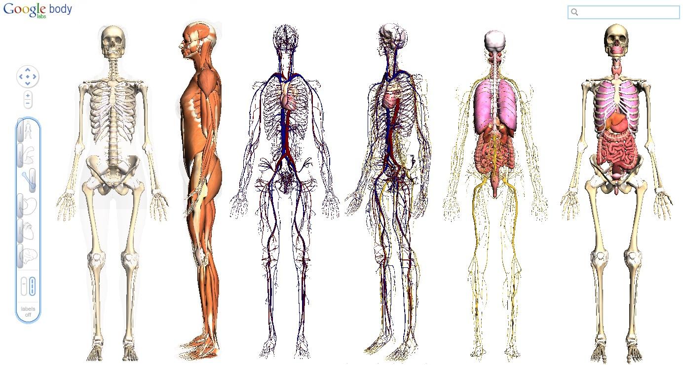 Biomedicina UniBH: Anatomia Humana em 3D pelo Google Body Browser