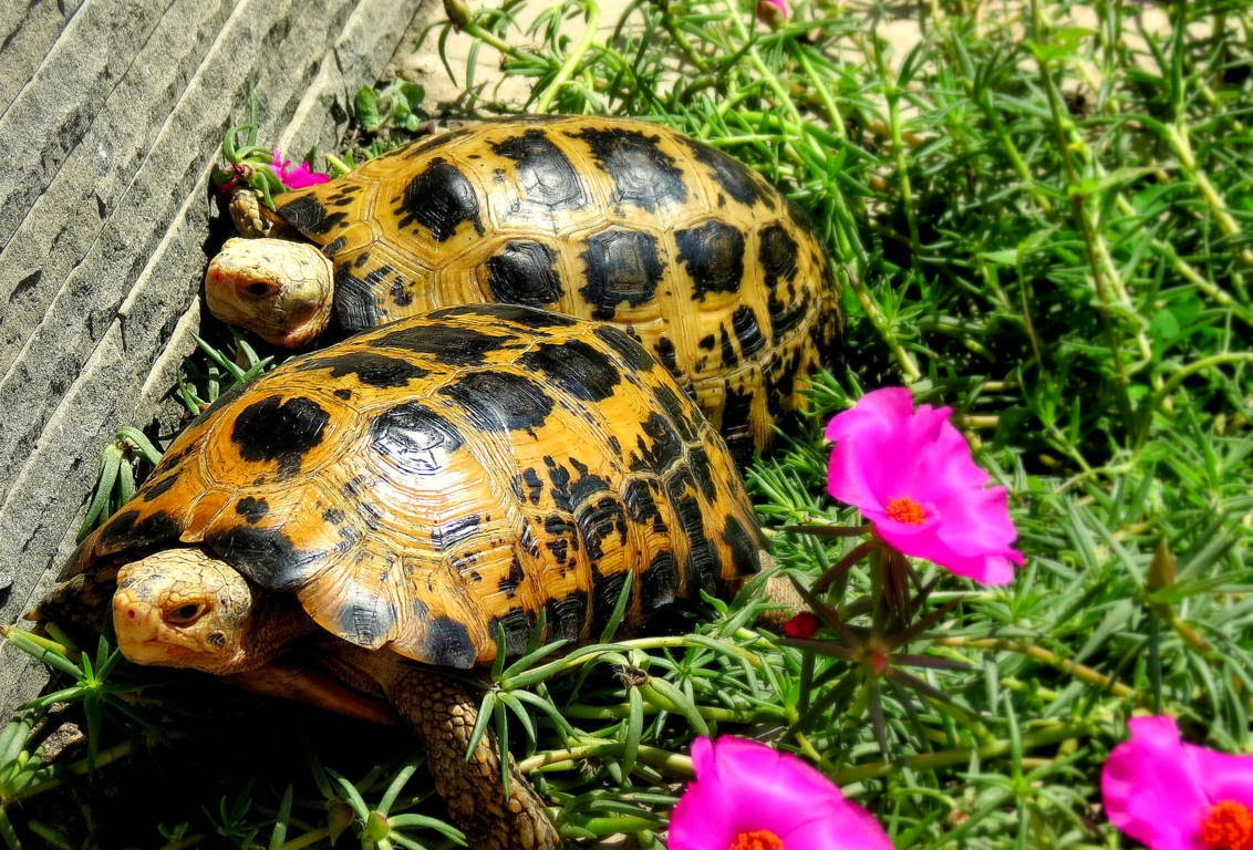 http://zoozon.blogspot.com/2015/01/turtle-gallery-pictures-10.html
