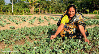 "Agriculture  Picture;img src=""http://2.bp.blogspot.com/-03CaS4VMy8M/VcBN9_B-sNI/AAAAAAAAA1s/MNL7RZAr5kY/s1600/Bangladesh_Gender-WE_Woman-Farmer.jpg"" alt=""Agriculture  Picture"" />"