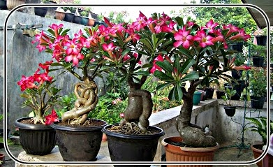 Tips menata halaman rumah dengan tanaman bunga dan tanaman buah
