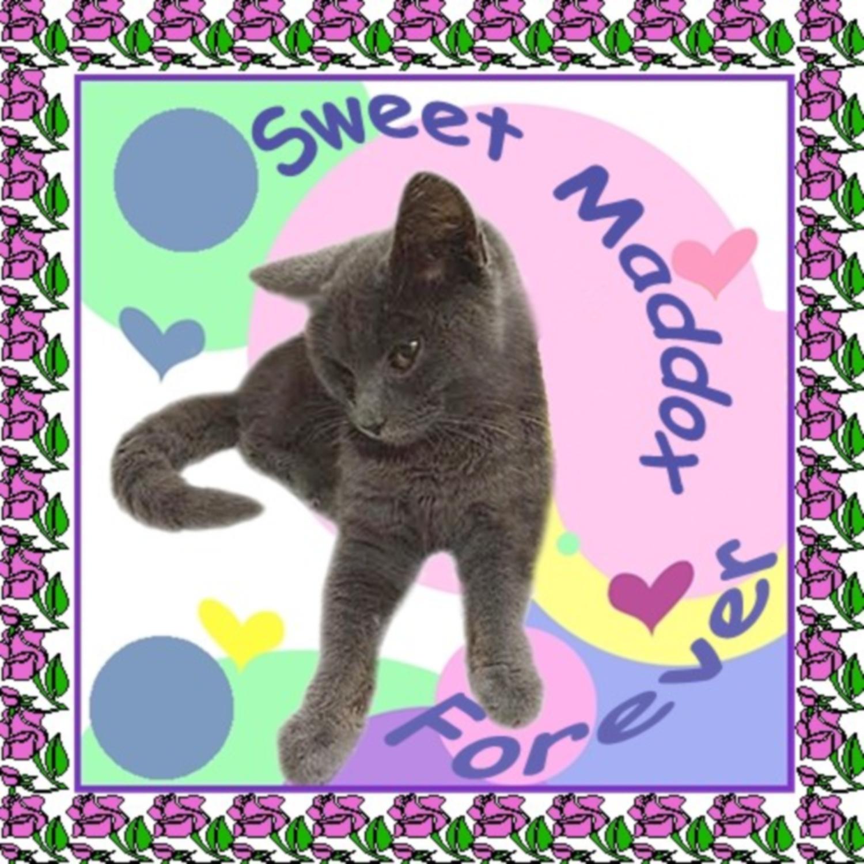 Sweet Maddox Furever