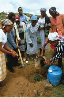 Green Belt Movement volunteers plant a tree