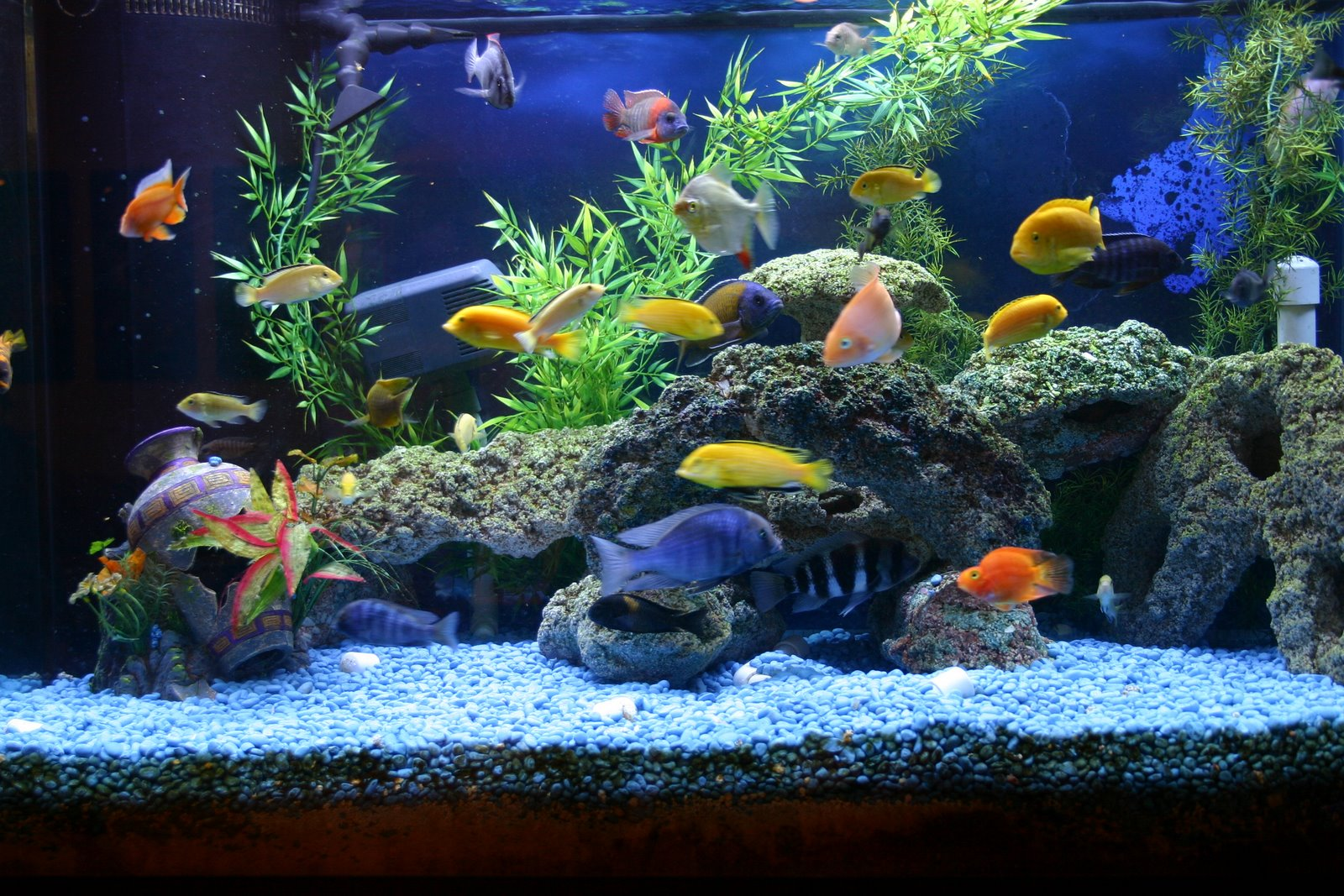 Fish and aquarium blog must have aquarium accessories for African cichlid tank decoration