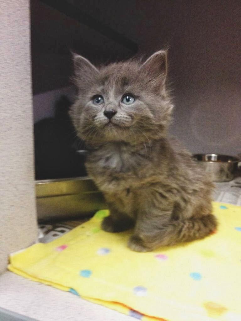 Funny cats - part 90 (40 pics + 10 gifs), cute fluffy kitten