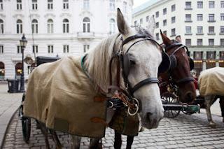 Paseo en caballo por Viena