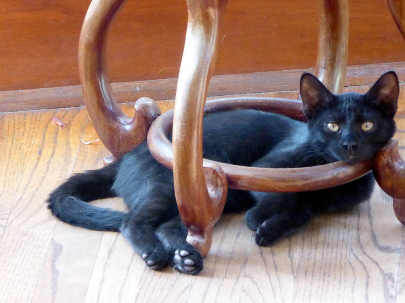 Dr. Pyewacket resting in the base of a plant stand