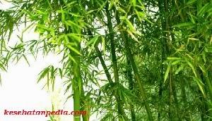 manfaat daun bambu