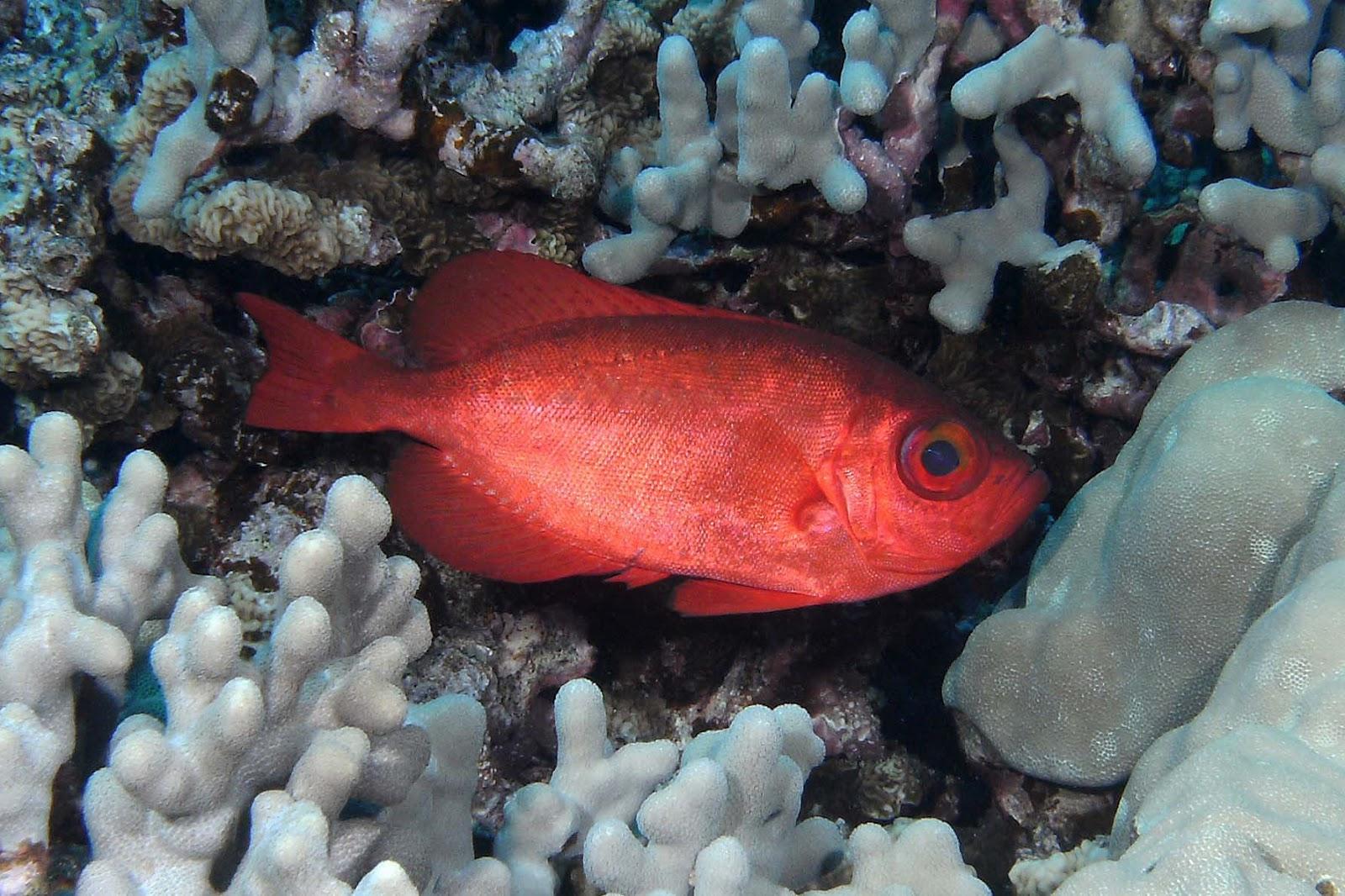 Diving the Kona Coast: Quick Change Artist