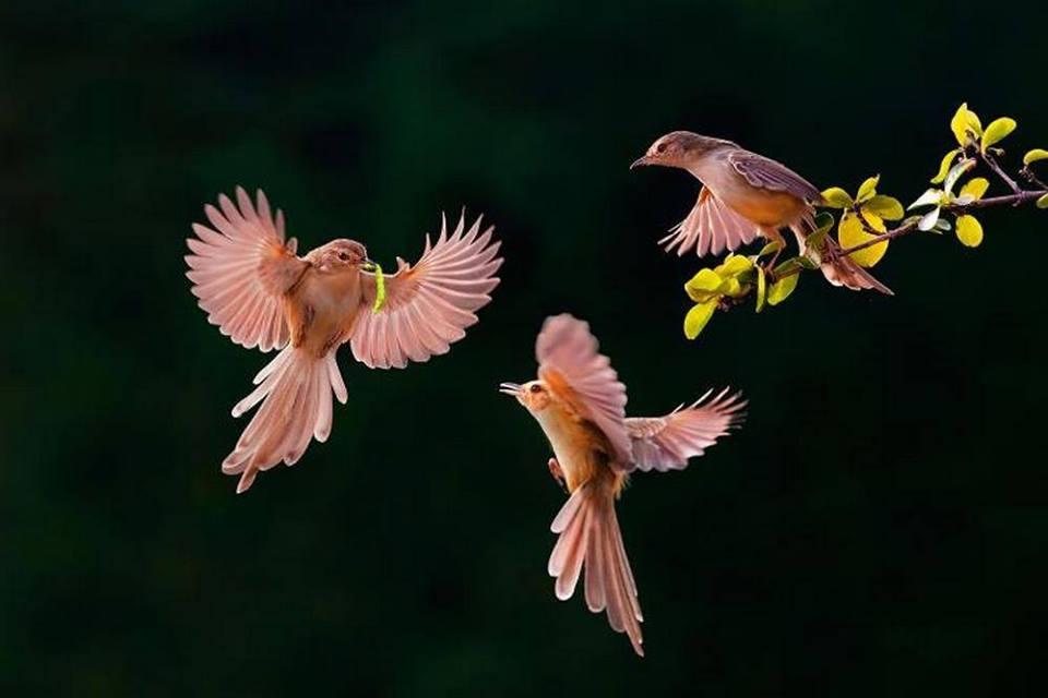 Różowe koliberki