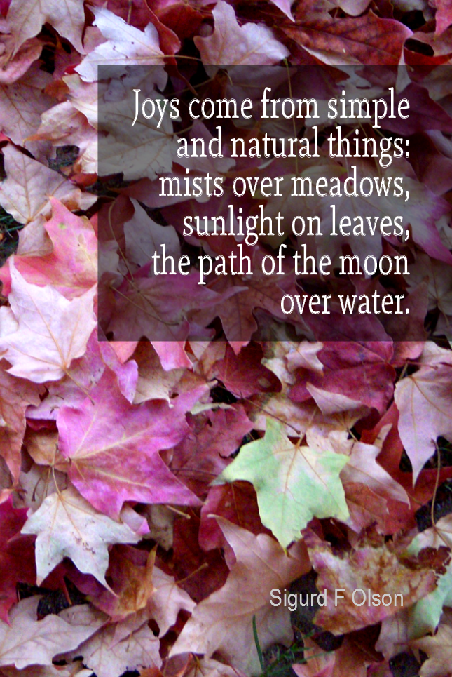 visual quote - image quotation for HAPPINESS - Joys come from simple and natural things: mists over meadows, sunlight on leaves, the path of the moon over water. - Sigurd F Olson