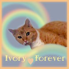 Ivory  RIP