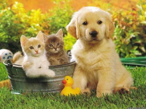 Cats and dogs together pictures