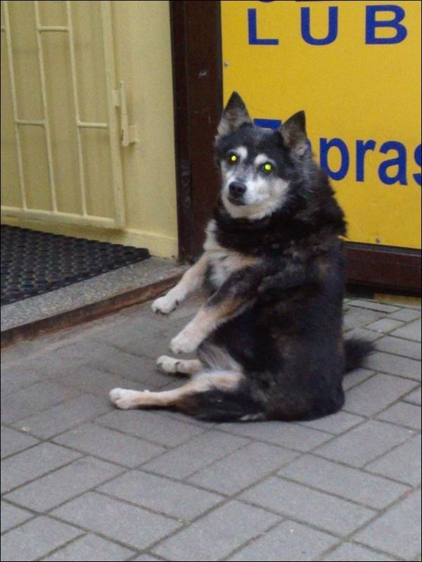 A dog sitting strangely, funny dogs, funny dog pictures
