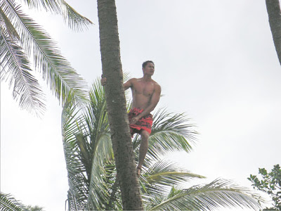 native climbing a palm tree in Hawaii