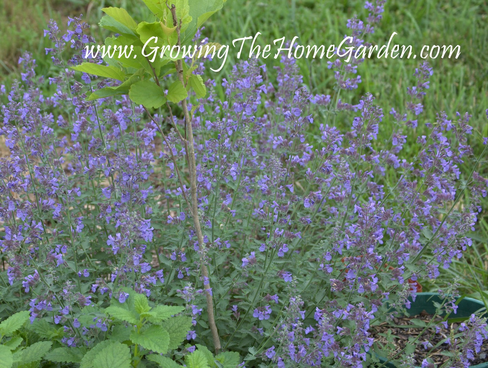 5 Easy to Grow Plants No Garden Should Be Without The Friday – What Should I Plant in My Garden