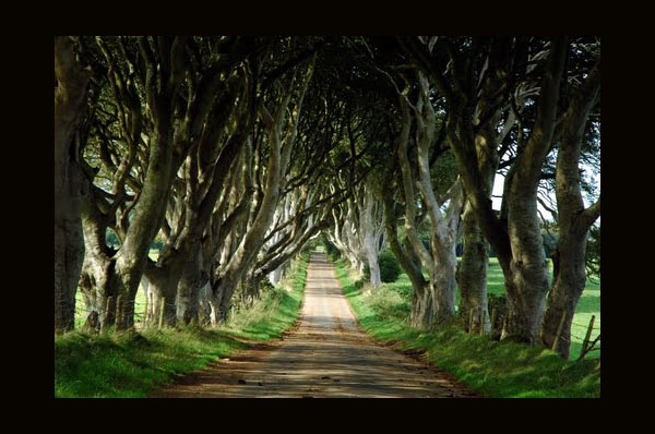 The Dark Hedges by S. Raybourne, Northern Ireland, Ballymoney, as seen on linenandlavender.net