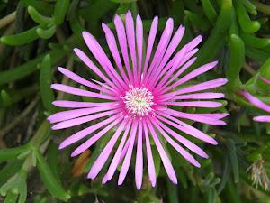 別荘物件で田舎暮らしとリゾートライフ Blog の花