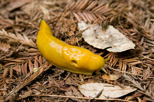 Der lngste Penis der Welt? - Bilder - Jolie