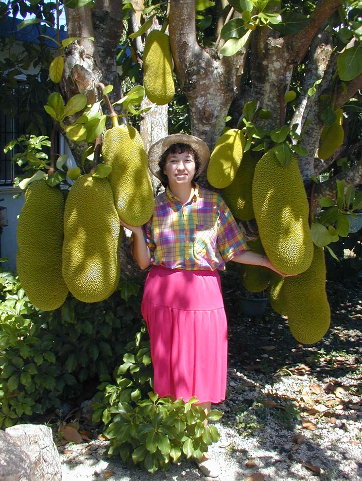 jack fruit fruit stands near me