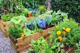 SPRING IN THE GARDEN, RAISED BED GARDENING
