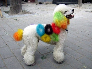 Funny Colored Dog
