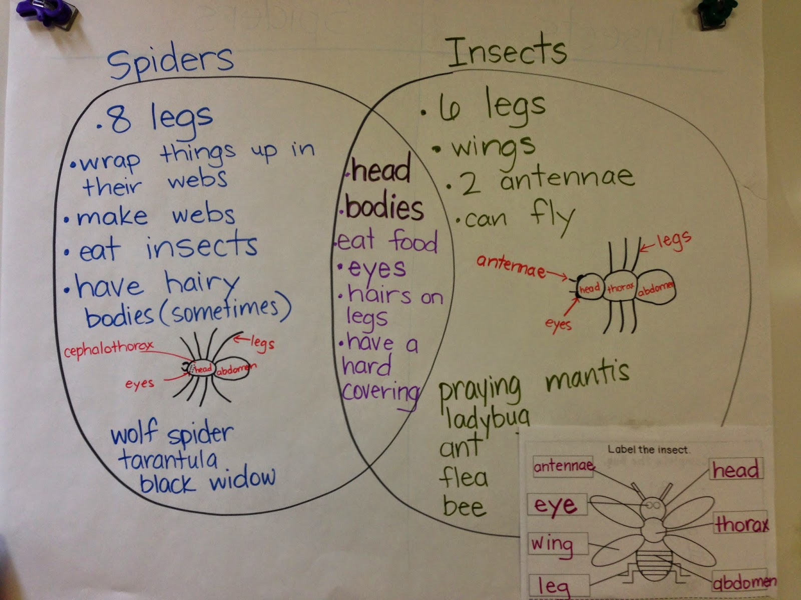 Venn diagram on bugs online schematic diagram tons of fun with k and 1 playing with insects and spiders rh tonsoffunwithkand1 blogspot com venn diagram on day of the dead and halloween venn diagram ccuart Image collections