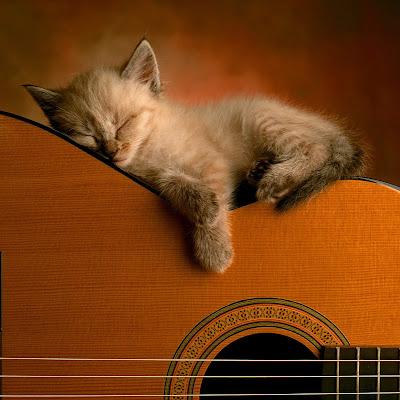 Gambar Alat Musik gitar @ Digaleri.com