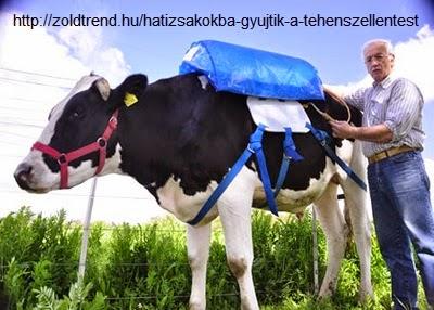 http://zoldtrend.hu/hatizsakokba-gyujtik-a-tehenszellentest