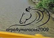 Arpa Cuatro y Maracas 2009