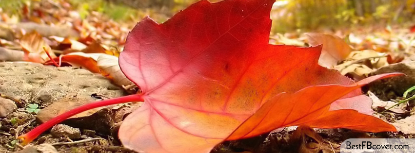 50 Beautiful Natural Facebook Cover Page Photos How All Do