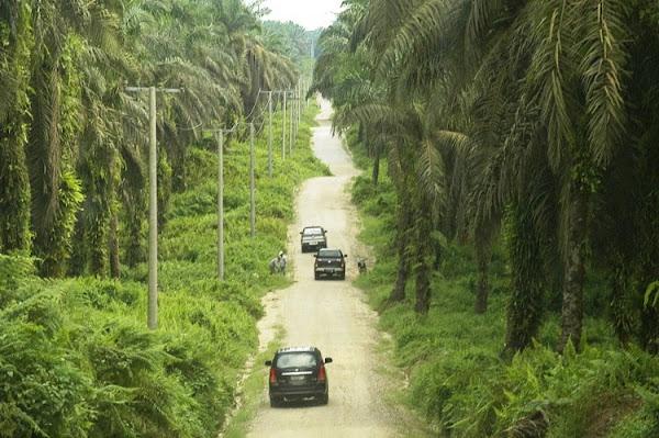Kelapa Sawit Riau