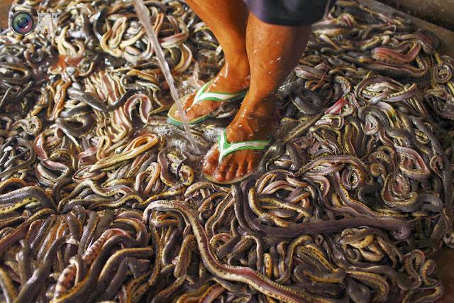 Мужчина работает на змеиной бойне в деревне Капетакан недалеко от города Чиребон, Индонезия. (Beawiharta Beawiharta/REUTERS)