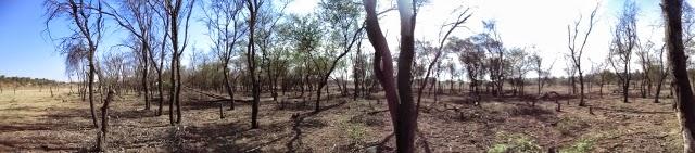 panorama - Cutting down of trees in vellalore coimbatore