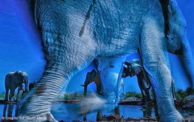 Wildlife Photographer of the Year – Grand title winner