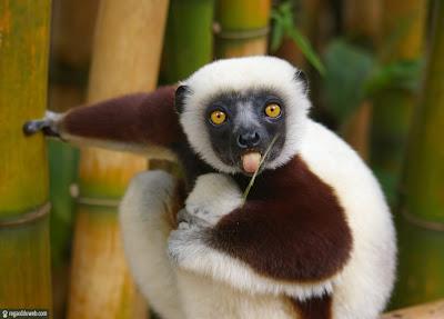 Images insolites et drôles Animal - Singe v21